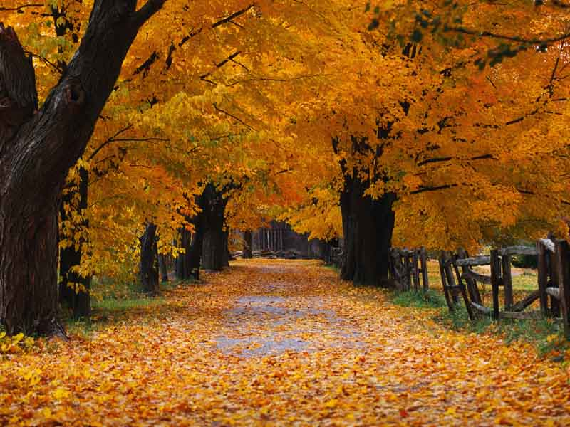 The song Autumn Leaves, www.greatamericanthings.net