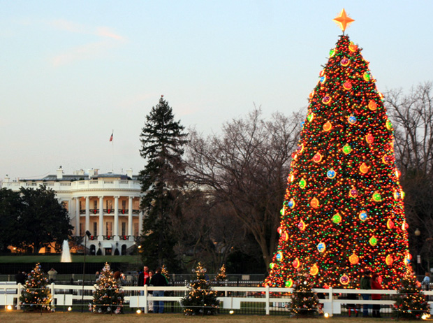 Americana National Christmas Tree Great American Things